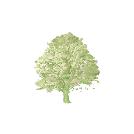 Projekt Arboretum favicon